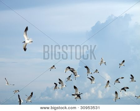 an image of seagulls flying over cloudy sky