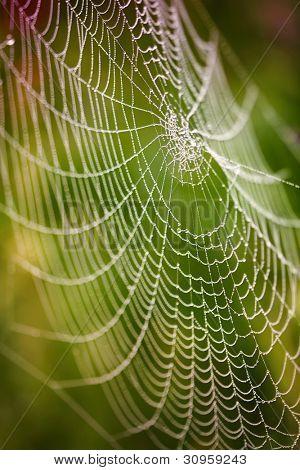 Na de regen, de verborgen schoonheid van deze spinnenweb