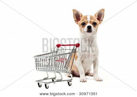Pomeranian Dog Next To An Empty Shopping Cart