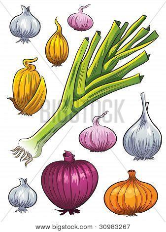 Onion Collection