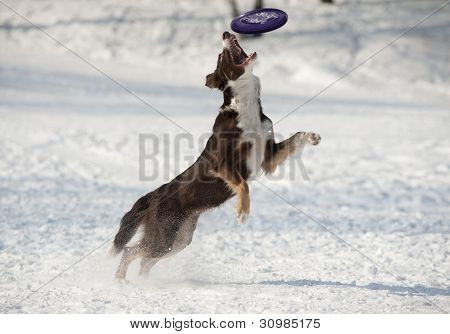Dog Catches Disk