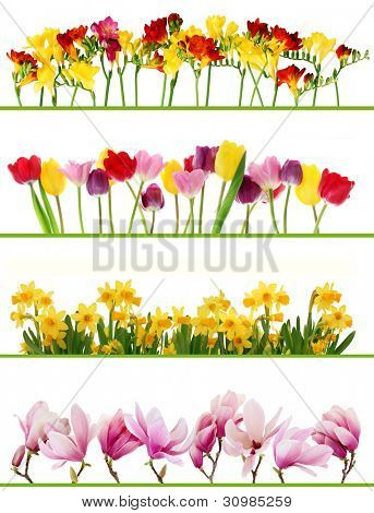 Colorful fresh spring flowers borders on white background. Tulips, daffodils, freesia, magnolia.