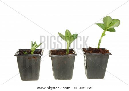 Three Plant Seedlings