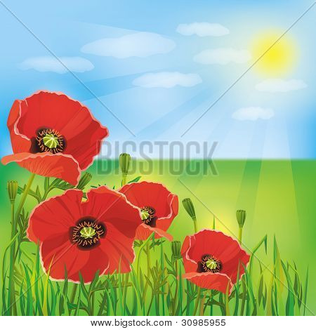 Nature Background With Flowers Poppies. Summer Landscape