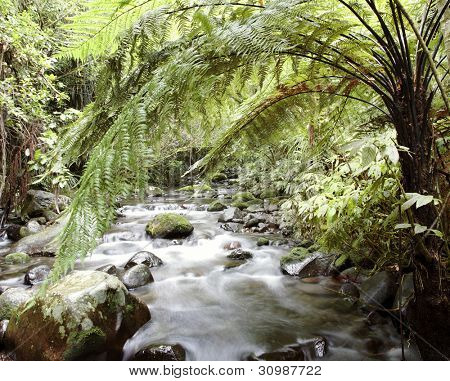 Fresh water stream flowing in tropical forest