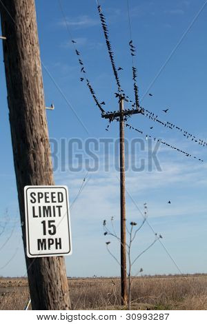 Black Birds on the line in a field