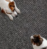 Dog and cat together. Dog hugs a cat on the rug at home. Friendship of pets poster