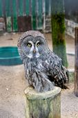 Save A Bird, Save Yourself. Cute Owl Bird With Large Eyes And Hawk Beak. Owl Bird Perched In Zoo Cag poster