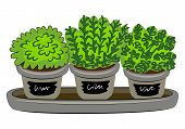 Indoor Plants In Pot Vector Illustration. Organic Fresh Micro Greens And Сulinary Herbs. Year-round  poster