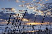 image of sea oats  - Sun - JPG