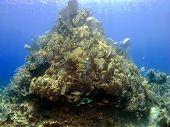 Постер, плакат: Коралловые головы на острове Кайман Брак