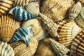 Pile Of Sea Shells With Two Blue Shells. Top View. Close Up. poster