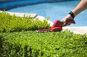 stock photo of electric trimmer  - The person cuts the hedge by the Hedge trimmer - JPG