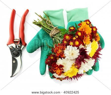 Secateurs with flowers isolated on white