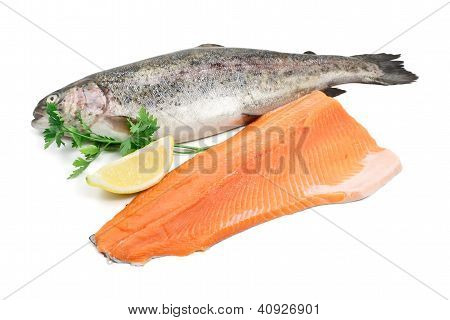 Trout with Fillet