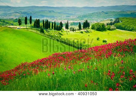 Hill And Cypresses