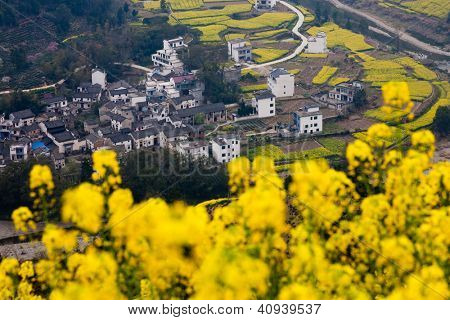 Chinese rural landscape: a small village at the foot of mountain with oilseed flowers as foreground.