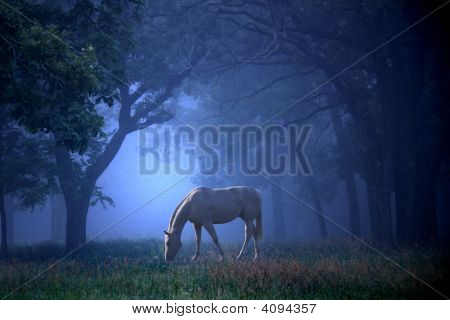 Horse In Blue Foggy Mist