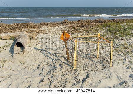 Protected Loggerhead Turtle Nest