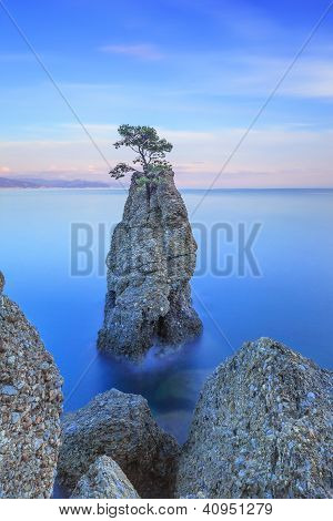 Portofino Park. Pine Tree Rock Cliff. Long Exposure. Liguria, Italy
