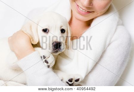 Closeup of puppy of labrador on the hands of woman in white sweater on white background