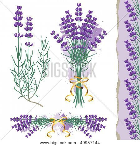 Great set with lavender flowers and seamless lavender border