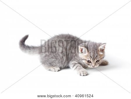 Little kitten playing catch something. Isolated on white