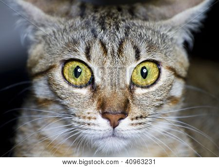 Kitten. common breed cat, with frightened eyes