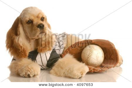 Cocker Spaniel With Ball And Glove
