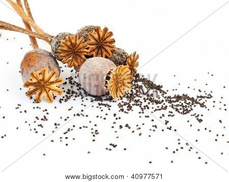 Poppy Heads And Seeds