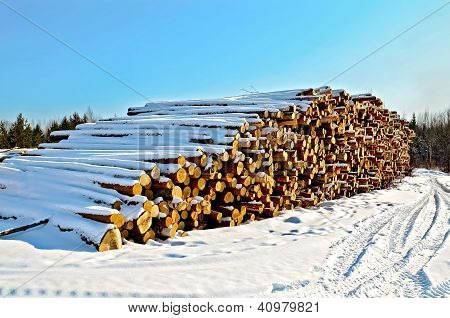 Timber in the snow on a sunny day
