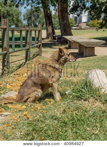 Stray Dog In Park