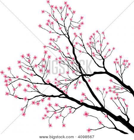 Ramas de los árboles con flores rosadas