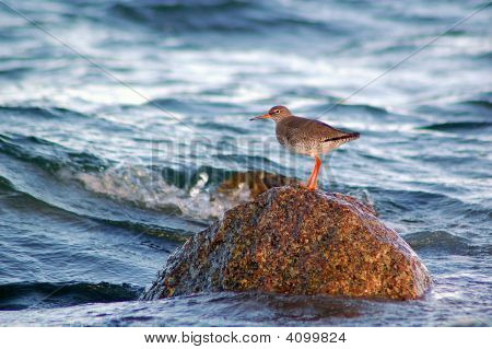 Sea Burd