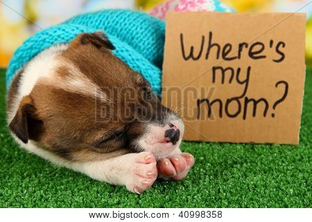 Abandoned little puppy seeking home on green grass on natural backgraund