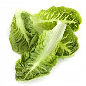 foto of romaine lettuce  - Romaine or cos lettuce leaves - JPG