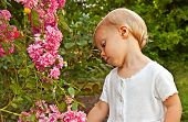 picture of climbing roses  - This eighteen month old toddler Caucasian girl is in the garden looking at climbing pink miniature roses while learning about her world - JPG