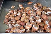 picture of whelk  - Whelks at the fresh market in Thailand - JPG
