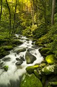 stock photo of appalachian  - Smooth flowing water in a stream in the Smoky Mountains - JPG