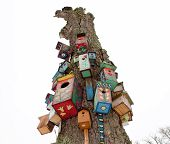 picture of nesting box  - various colorful bird nest boxes houses hang on old dead tree trunk - JPG