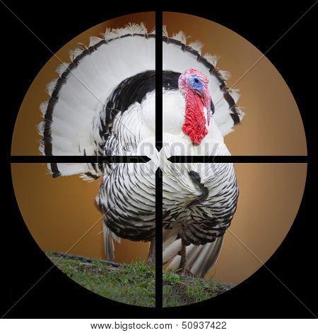 A Turkey in the Hunter's scope.