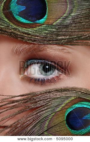 Eye And Peacock's Feathers