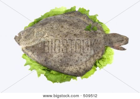 Turbot fish stock photo stock images bigstock for Turbot fish price