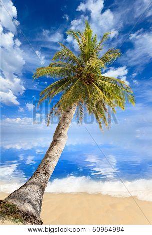 Paradisiac beach with sea and coconut palm tree