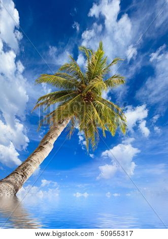 Paradisiac beach with sea and coconut palm tree and water reflections