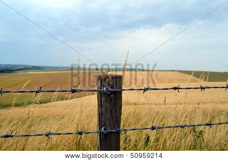 Barbed wire fence and post.