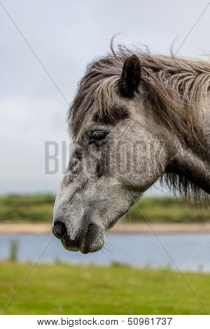 Gray Horse�s Head