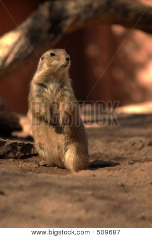 Prarie Dog Two