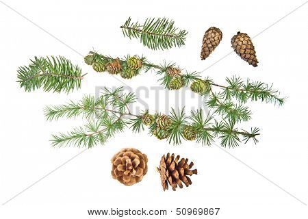Set of cones with branches and Christmas ornament on white background