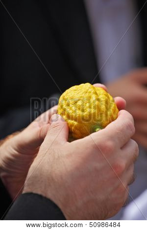 Jewish autumn holiday of Sukkot. Beautiful man's hands hold a ritual fruit a citrus
